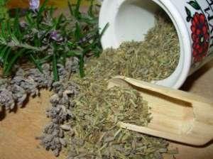 лекарственные травы2