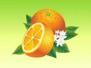 realistic-oranges-vector-element_21-25519529