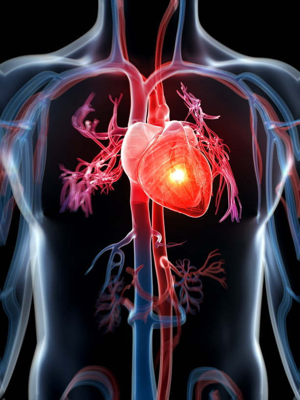 physiological basis of treatments of heart failure biology essay Esc heart failure is the open access journal of the heart investigation and treatment of heart failure molecular and cellular biology, pathology, physiology.