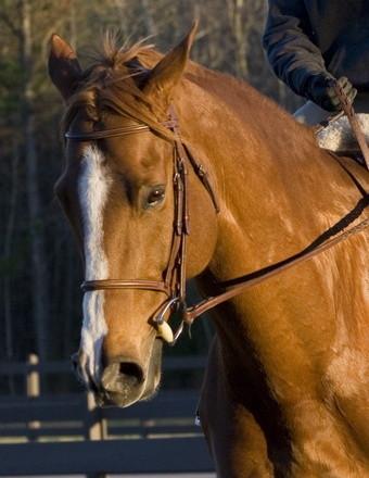 Brutis the Horse