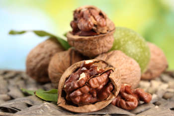 walnuts with green leaves in garden, on green background