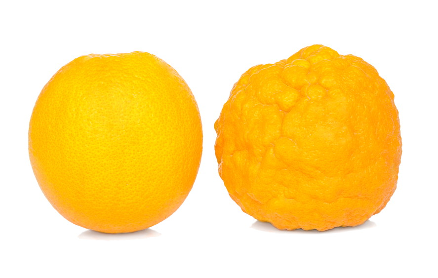 Orange healthy and sick.