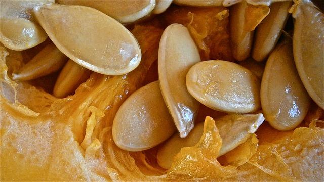 pumpkin-230865_640