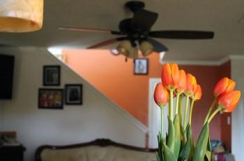 tulips-408726_640