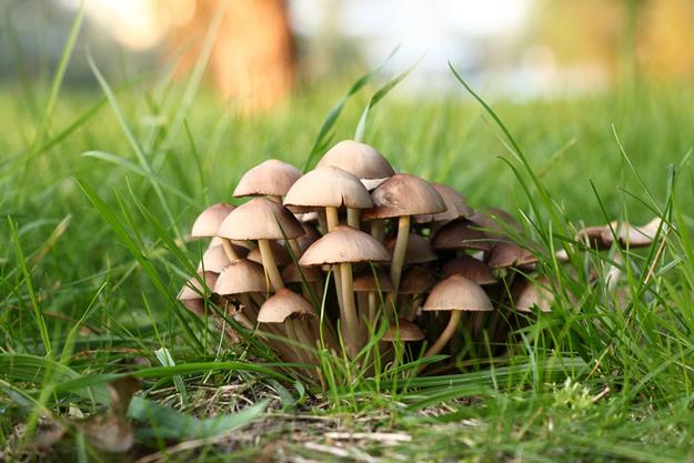 Нельзя также злоупотреблять грибами, которые считаются условно съедобными. В небольших количествах и после надлежащей обработки волнушки, сморчки, рядовки и грузди вполне пригодны в пищу, однако при неправильном приготовлении и в больших количествах они опасны.