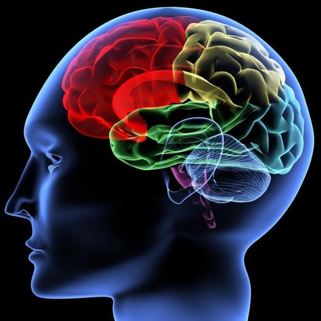 human-brain-700x700