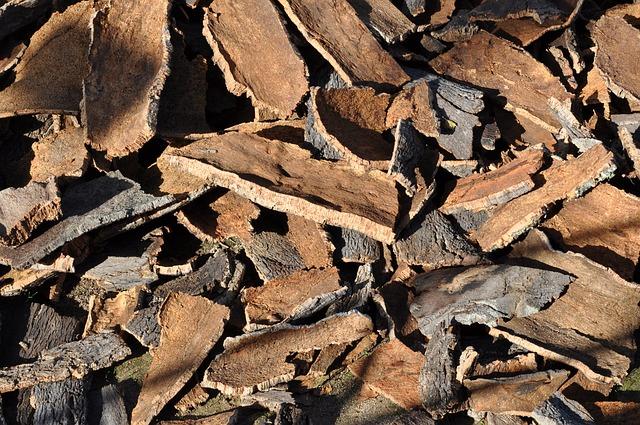 cork-oak-505263_640